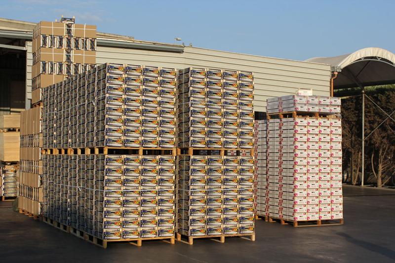 Produzione imballaggi ortofrutticoli for Arredamento ortofrutta in legno